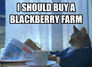 I should buy a blackberry farm